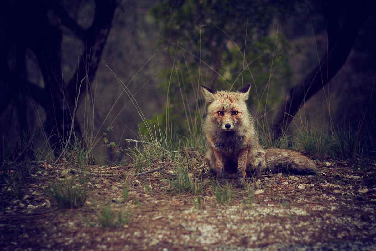 Mammal Tracker app