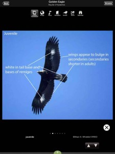 Guía de aves Audubon / Audubon bird guide