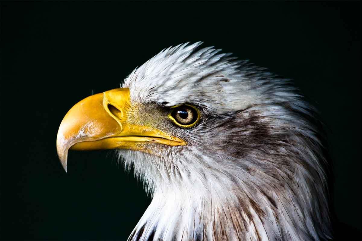 Audubon ID app