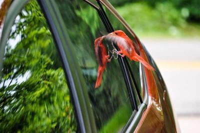 Colisiones de aves contra ventanas