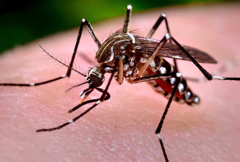 Resultado de imagen de mosquito alert