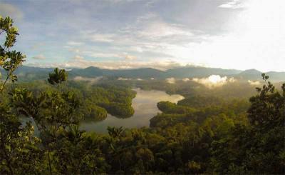 Tecnología para prevenir la deforestación