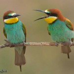 Birds Check app