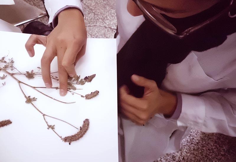 Cómo hacer un herbario digital con tu móvil / herbarium sheets