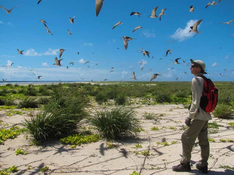 Observación de aves / bird sightings