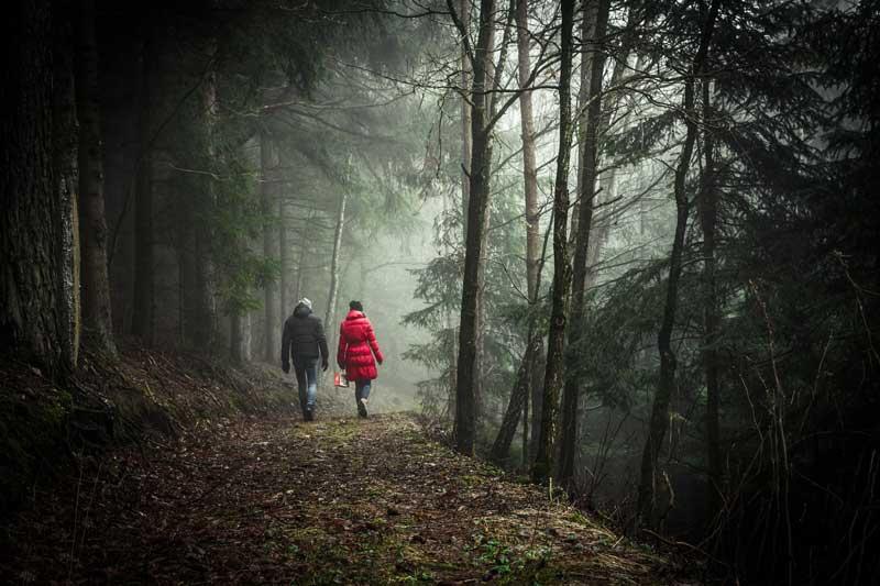 Reforestum, una app para frenar la tala de árboles y recuperar los bosques