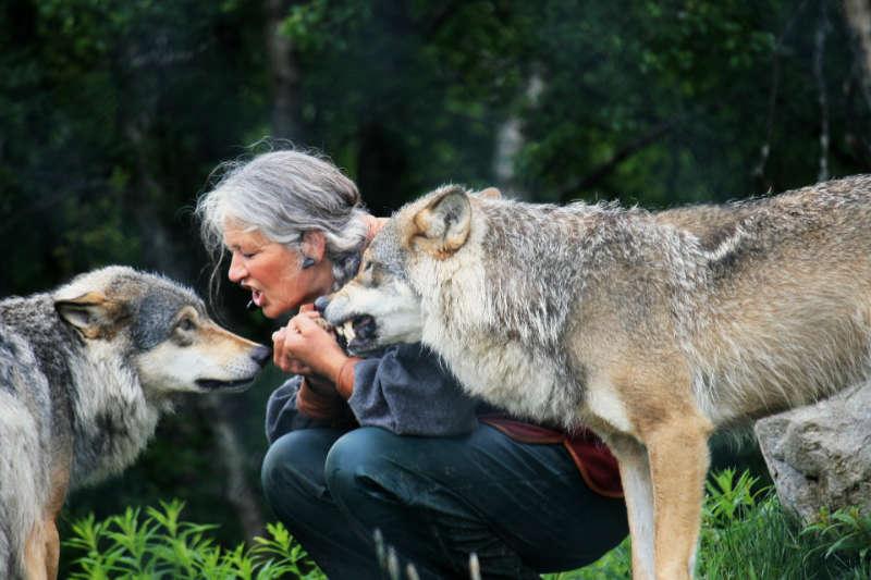 Animal Observer, una app para registrar el comportamiento animal