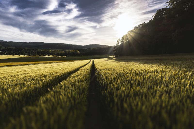 Hesperides, un software agrícola para controlar tu explotación