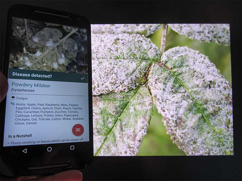 Greenapps&web | Identifying plant diseases with Plantix app