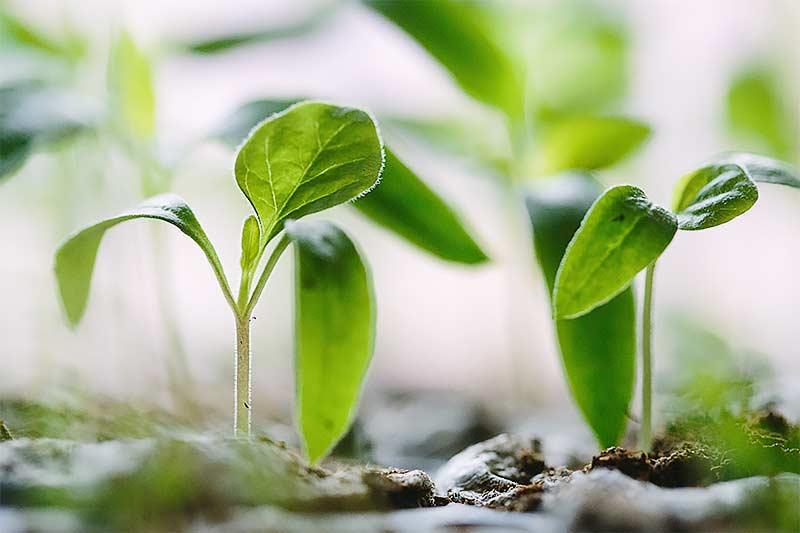 Vegetación en la casa inteligente