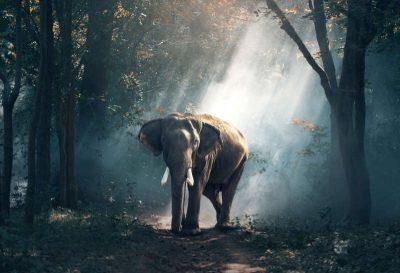 ARShift Endangered, una app de realidad aumentada para Android e iOS con la que observar animales en peligro