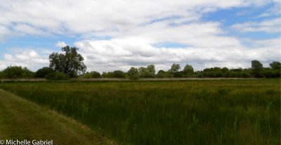 Great Fen Quest, a game for children to learn about the wild animals and plants of this swampy area