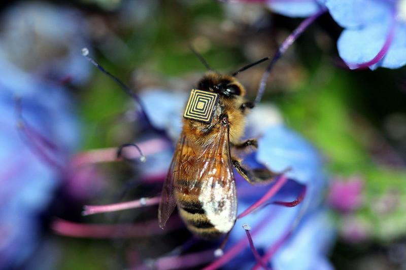 La tecnología se abre paso para ayudar a las abejas en peligro de extinción