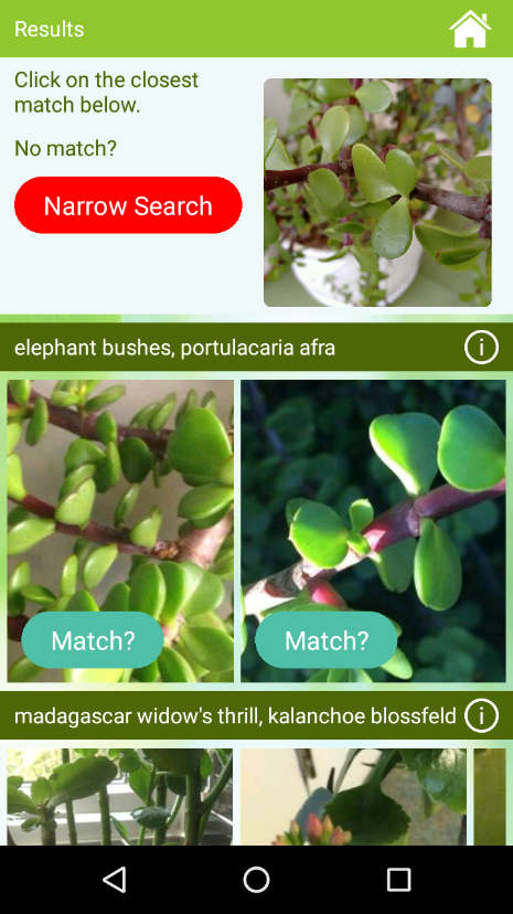 garden answers is a plant identification app that helps you to recognize plant species and pests and diseases through images - Garden Answers