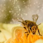 Polinizapp, learning pollination process