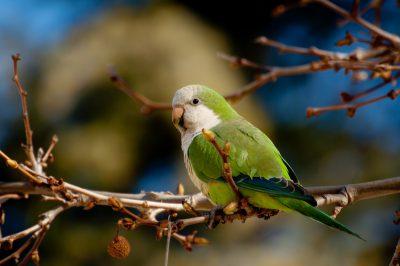 Exóticas Murcia, una app para registrar plantas y animales exóticos potencialmente invasores