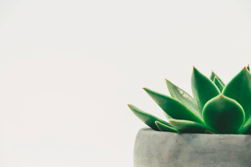 Air Cleaning Plants, la app que ofrece información sobre plantas de interior purificadoras del aire