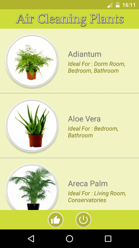 Air Cleaning Plants Discover What Are The Indoor That Purify